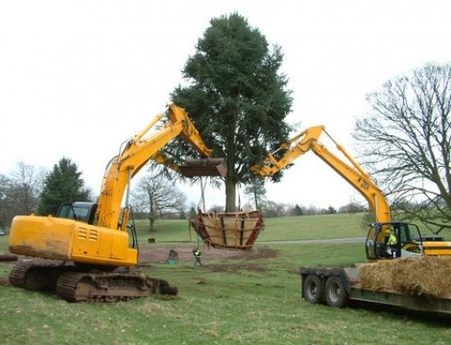 Early Booking Offer For Tree Moving