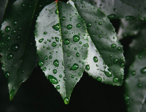 Time To Water Your Newly Planted Trees